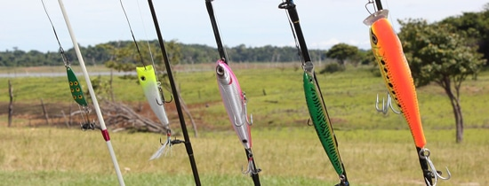 Best Carp Fishing Bait