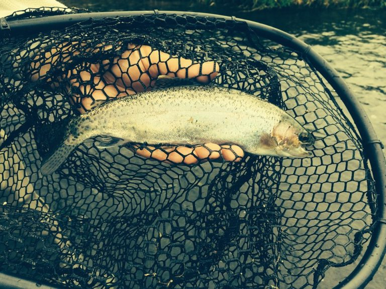 Trout Flies in Fishing – How to?