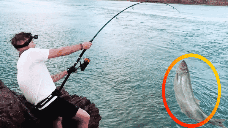 Practical Guide to The Best Surf Fishing Rod You Need Today.