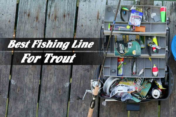 The Best Fishing Line For Trout